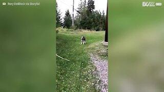 Bimbo tenta di imitare il suo cagnolino!