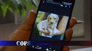 Puppy Love, COPS TV SHOW