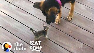 Stray Kitten Picks A Dog As Her Mom   Cat Crazy
