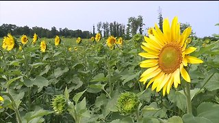 Maria's Field of Hope returning to Avon location this summer