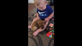 First meeting: Puppy preciously cuddles up next to baby