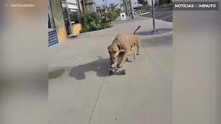 Conheça Bamboo: o cão skatista