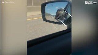 Un chien s'endort la tête par la fenêtre