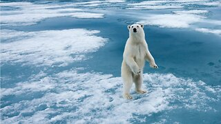 Five Cool Facts About Polar Bears