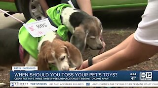 The BULLetin Board: When to replace your pet's toys
