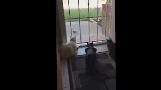 Funny Scares of People and Animals