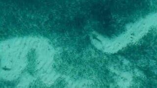 Haiens jakt på fisk skaper fantastiske mønstre under vann