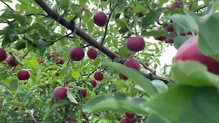 Michigan's apple cider season fun is not canceled at Blake's Orchard and Cider Mill
