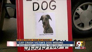 Car crash victim's dog missing