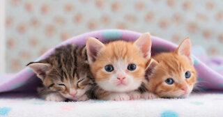 Cute cats videos adorable
