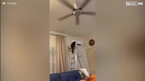 Gato sobe escadote e causa o caos!