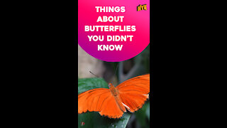 Top 4 Facts About Butterflies *