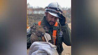 Las Vegas man helps rescue animals from Australia fires