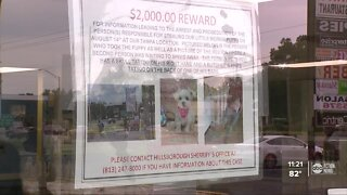 Surveillance video shows a man stealing a puppy from a Tampa pet store