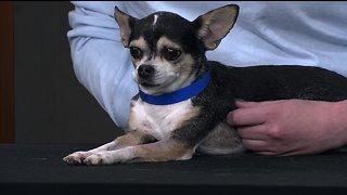 Idaho Humane Society talks spring classes and adoptable pets!