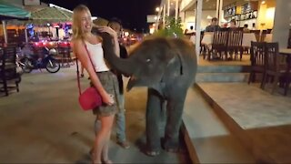 Cute Baby Elephant Playing with Cute Girl