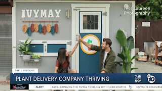 San Diego houseplant delivery company thriving during pandemic