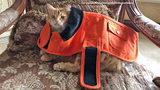 Patient cat models orange dog safety jacket