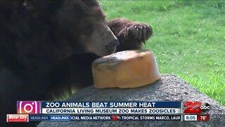 Zoo animals beat the summer heat