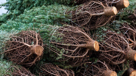 5 Eco-Friendly Ways to Get Rid of Your Christmas Tree