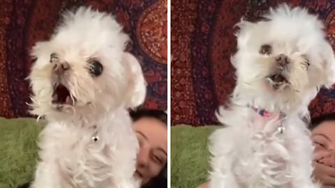Special needs dog literally screams when it barks