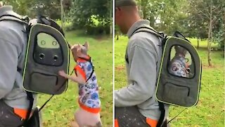 Explorer cat jumps into travel backpack