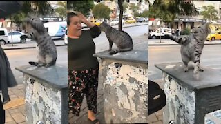 Angry cat 🤣🤣🤣 just watch (fight with people)