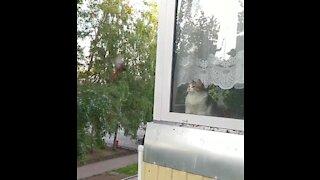 A small bird attacks my cat