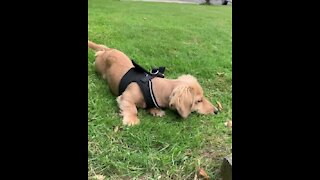 Sweet little puppy plays with a tiny moth in the yard