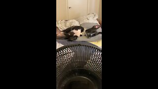 Dog finds perfect place to relax right in front of the fan