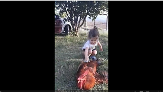 Little girl both scared and excited while petting rooster