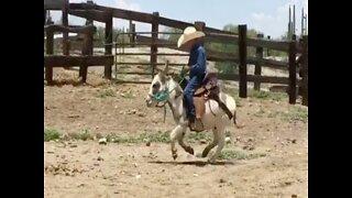 GIDDYUP! Tiny cowboy rides burro best friend - ABC15 Digital