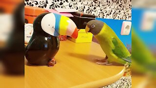 Parrot sings and blows kisses to his new toucan buddy