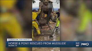 Horse and pony rescued from mudslide