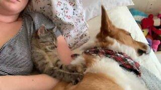 Kitten gives dog a relaxing massage