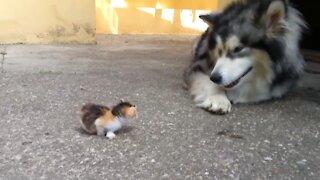 Dog scared of kitten