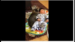 Sweet Kitty Preciously Cuddles With Baby Boy