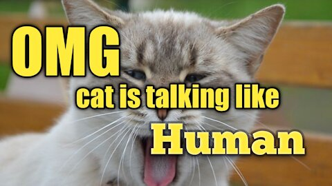 Cat talking as human