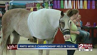 Pinto World Championship held in Tulsa