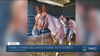 Beloved horse butchered in Collier County, family offering $10k reward