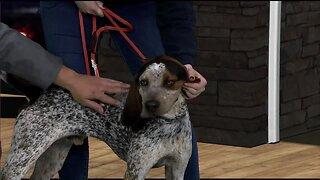 Idaho Humane Society: Slick!
