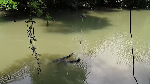 Dude feeds a giant monitor lizard from his drone