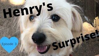 Henry's Surprise