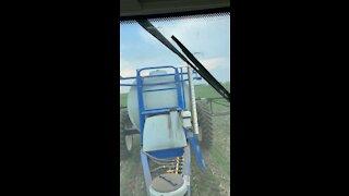 Spring Wheat 2020