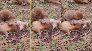 Baby monkey happily catches insects