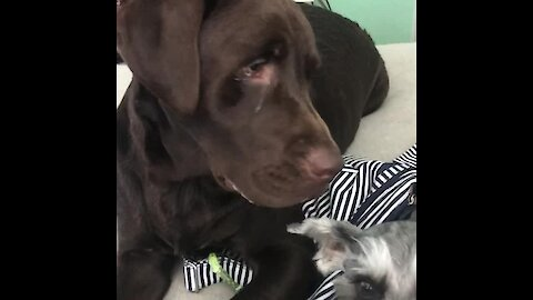 Service dog points out his best friend when asked