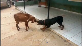 Funny and Cute Animals Fights Compilation Video   Animals Fights   Cutest Pets