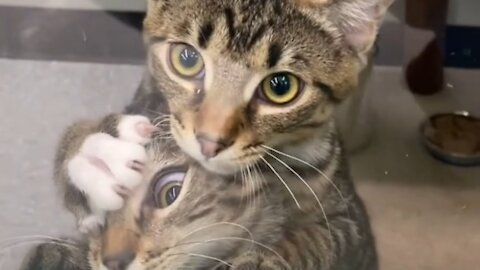 Kittens Jump On Each Other After Seeing Woman Outside Pet Shop