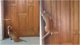 Ninja cat opens door like a pro