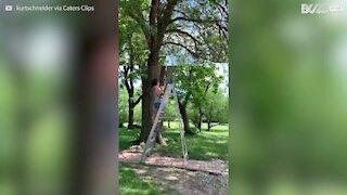 Cette femme se fait emporter par la branche qu'elle coupe
